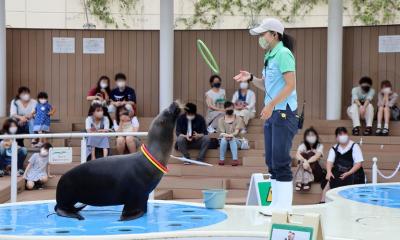 飼育スタッフ(海獣類・アシカチーム)