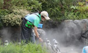 飼育スタッフ(海獣類・ペンギンチーム)